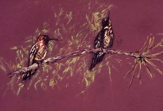 Branching Out- Hummingbirds By Cori Solomon