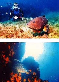 la pesca del coral llevó a nuestros antepasados a la isla
