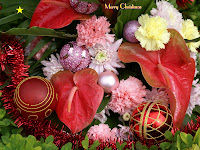 Download Christmas Flower Wallpapers