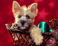 Dog Christmas wallpapers, Puppy Christmas wallpapers, Baby Dog Xmas Wallpapers