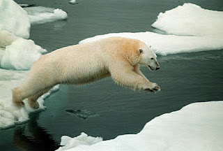 polar bear picture from http://www.greenpeace.org/international/photosvideos/photos/polar-bear-in-arctic