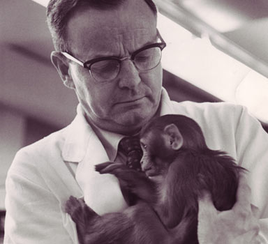 monkey drug trials experiment Monkey drug trials 1969 while animal experimentation can be incredibly helpful in understanding man, and developing life saving drugs, there have been  one of the experiments (pavlov's dog experiment) involves the proper use of animals in research, while the other ( monkey drug trials ) displays the improper.