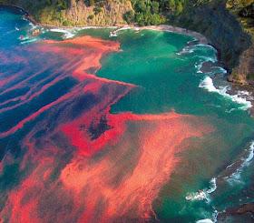 Red Tides Fenomena