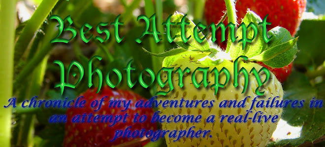 Best Attempt Photography