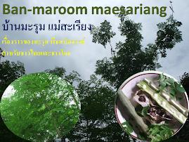 บ้านมะรุม แม่สะเรียง MORINGA HOUSE Thailand