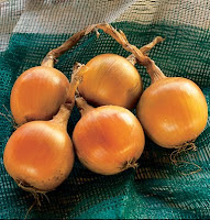 onions from Johnny's Selected Seeds