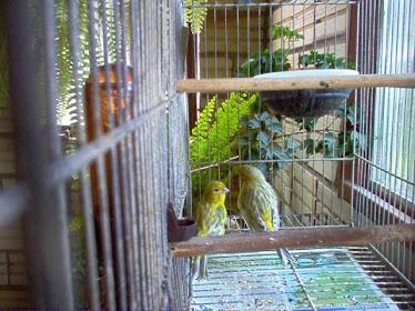 Casal Verde Opalino
