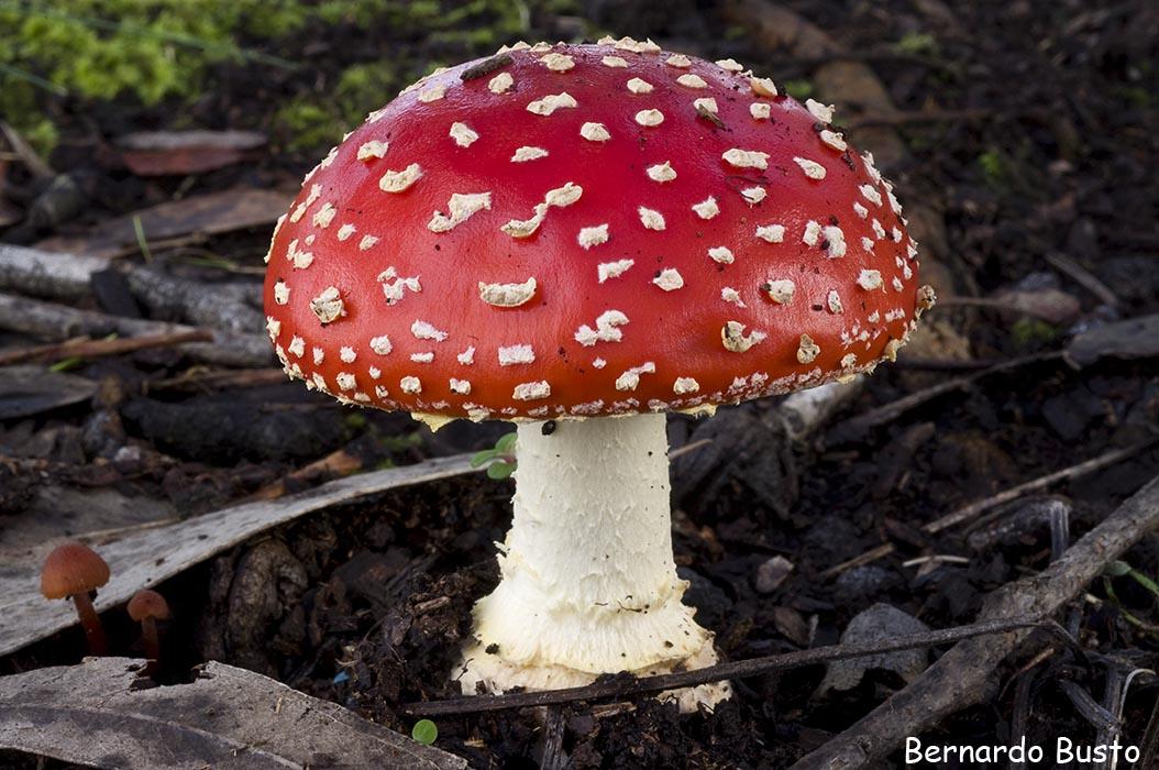 Naturales en el lvar los hongos - El moho es un hongo ...