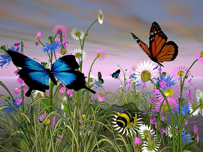 butterfly wallpaper beauty dekstop design