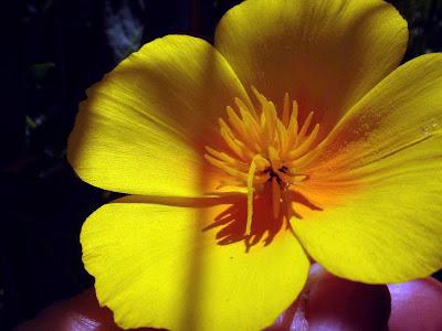 flor+amarilla.jpg