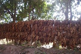 Finca Santa Anita, Museo del Tabaco en Coronel Moldes, Salta