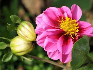 Enseñar la Palabra, un sendero entre flores y piedras