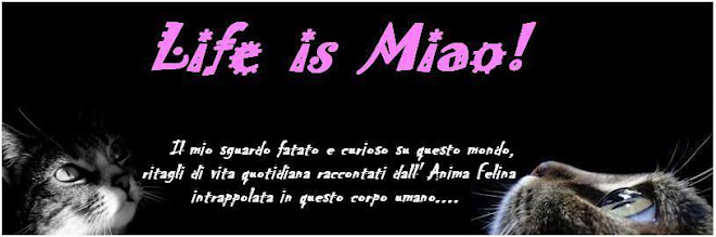 Life is Miao! Animafelina blog