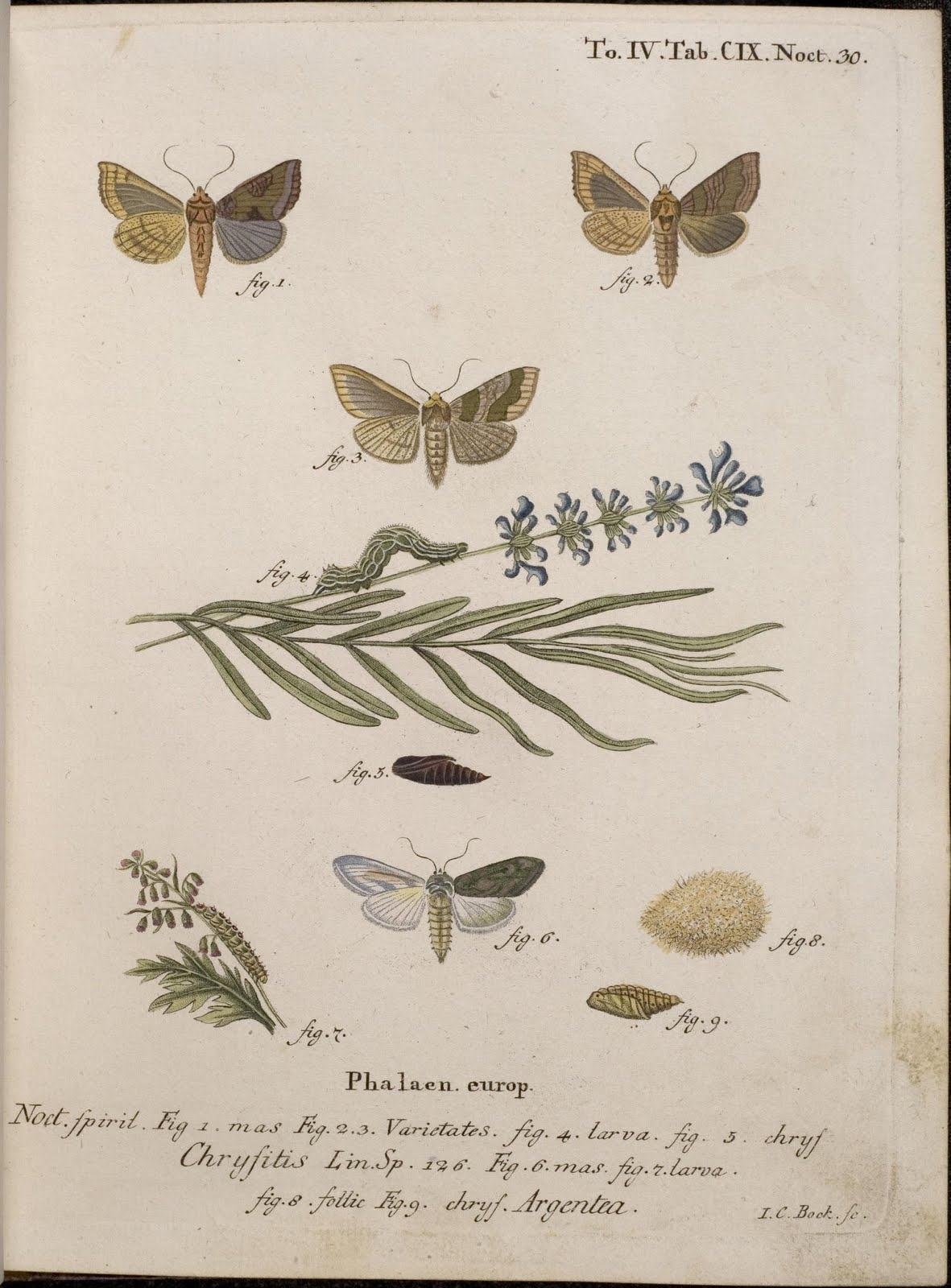 18th century moth engravings in colour