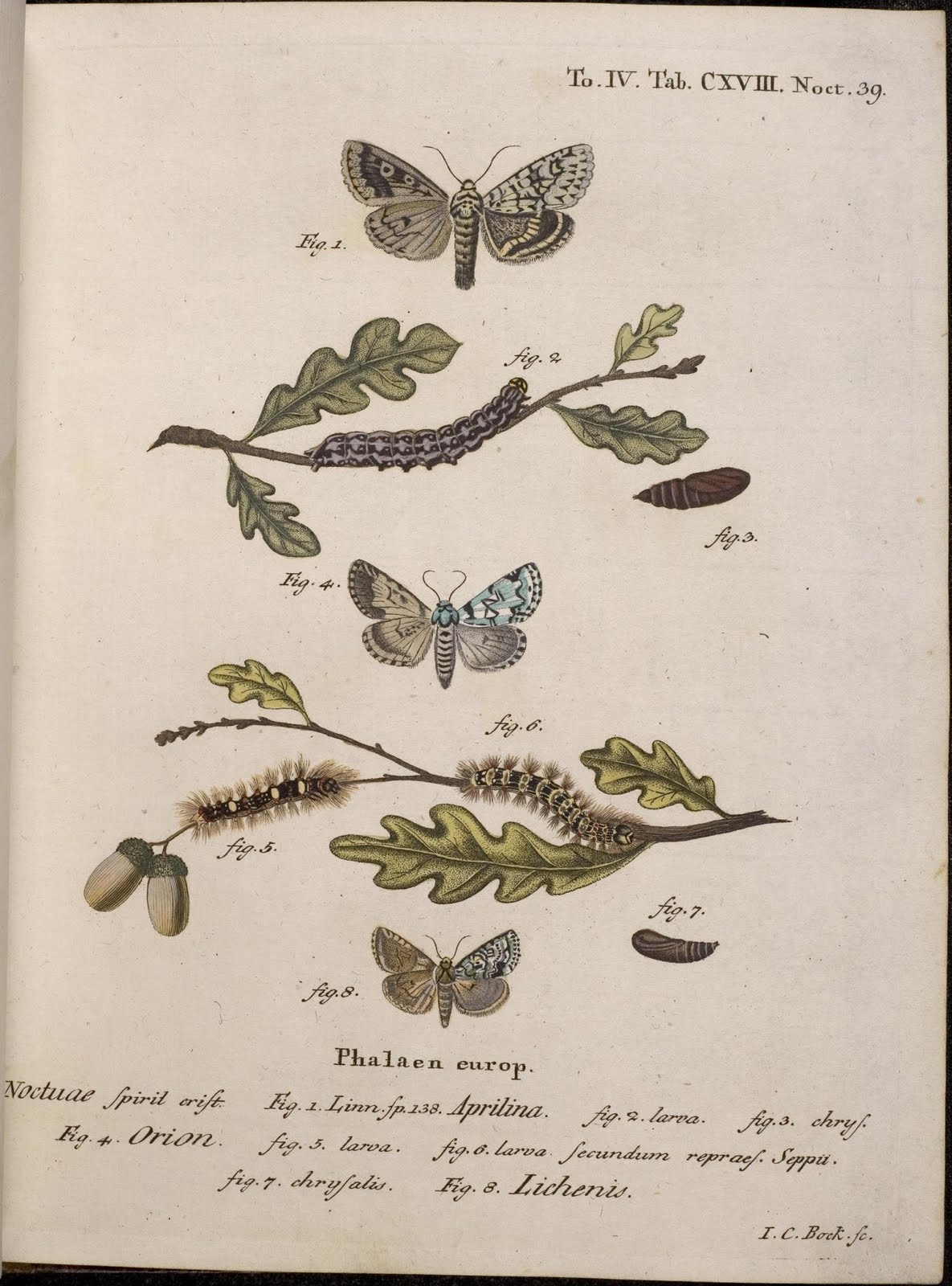18th cent. moth illustrations