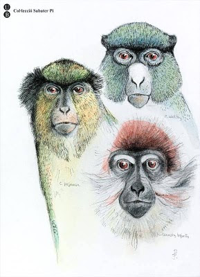Pi's sketch of 3 ape species