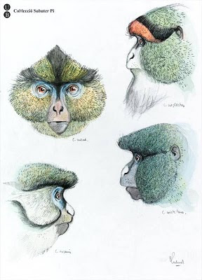 sketch of primate head views