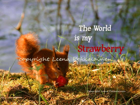 [The_World_Is_My_Strawberry_copyright.jpg]