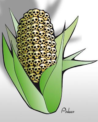 Faucher des OGM de Monsanto est un crime, empoisonner des millions de personnes n'en est pas un