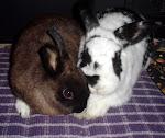 Daisy & Oreo
