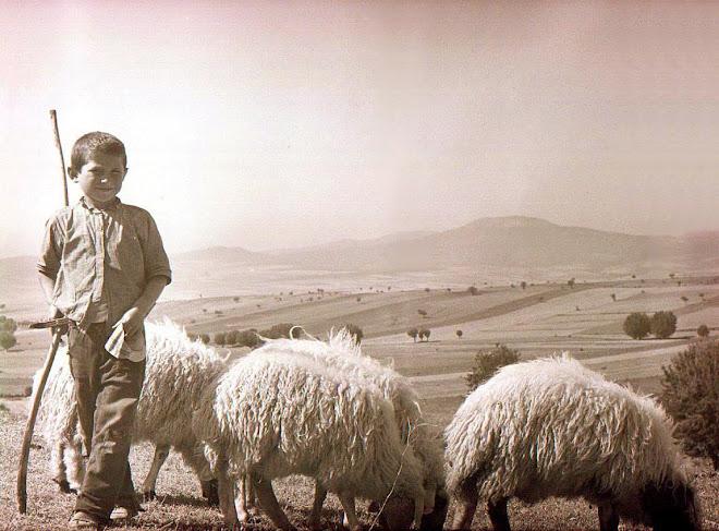 Çoban Çocuk