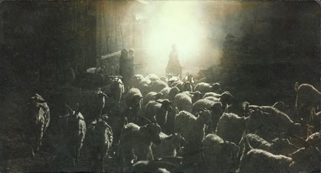 Akşam Sürü Köye Dönüyor