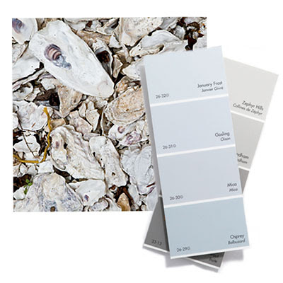 shell colors for decor inspiration