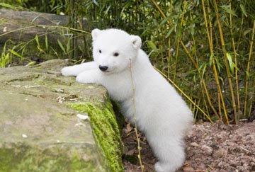 cute-baby-polar-bear-cub.jpg (360×243)