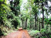 The Path to  Kallathigiri water falls