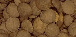 color photograph of lentils