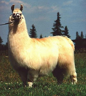 What makes a moose. (inseparable101: Happy Llama Sad Llama