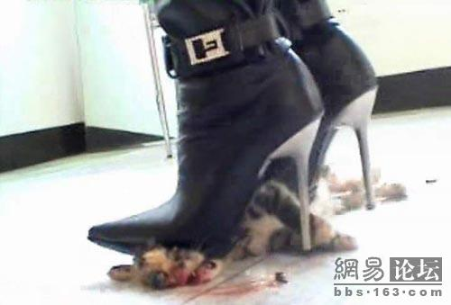 Kitten Killed By High Heels | Tsaa Heel