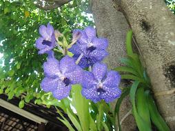 Amo as orquídeas e copos de leite