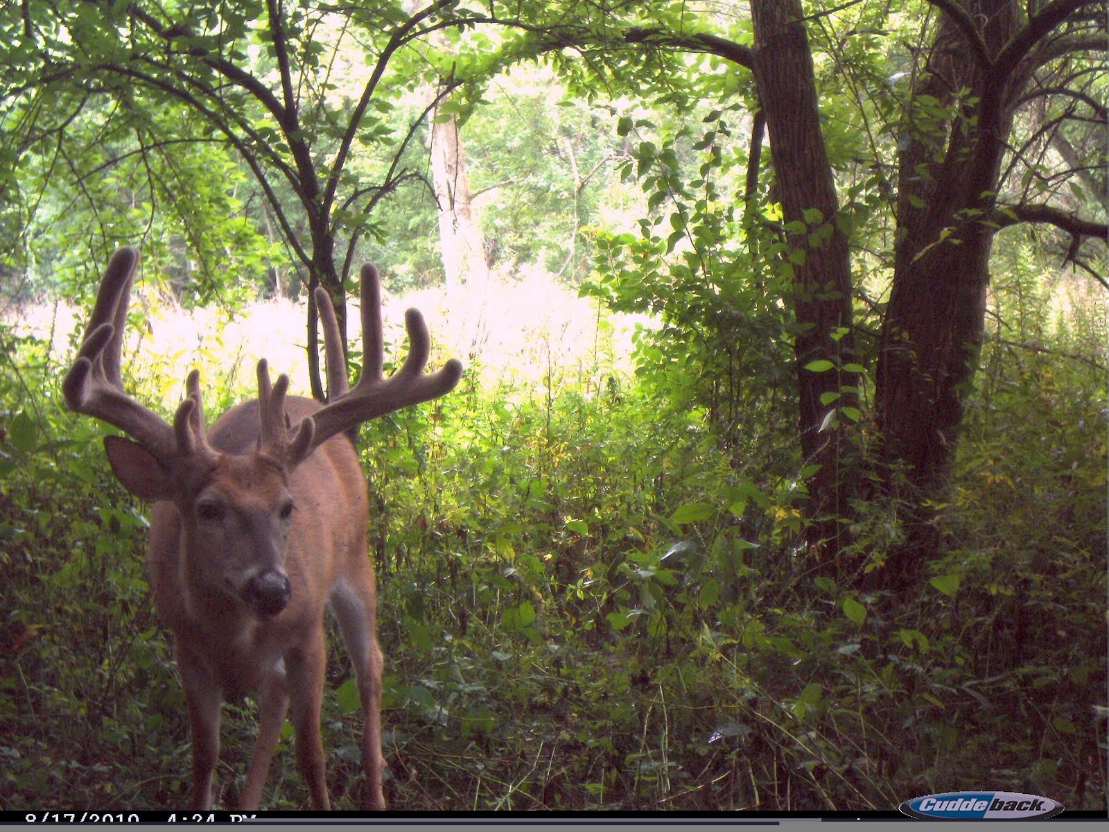 deer trail Analyze deer patterns, track hit list bucks, sync detailed weather and manage your photos deerlab's trail camera software empowers hunters to hunt smarter.