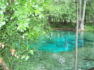 clear water spring surrounded by trees