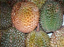 Durian, the smelly fruit, Bali