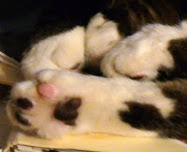 kitty paws series #12