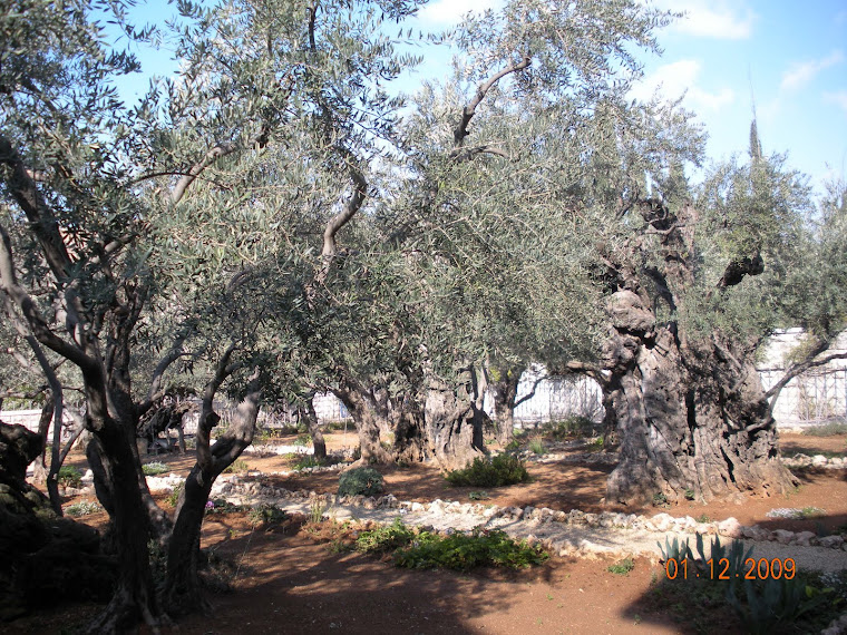 Garden of Gathsemene