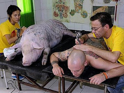 tattoo for a pig? why?