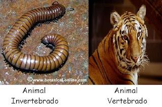 external image unio+de+los+animales.JPG