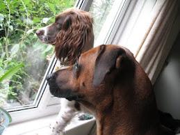 Peeking out the Window