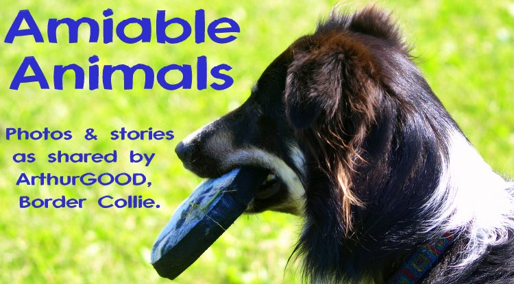 Amiable Animals