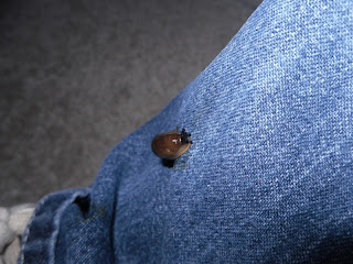 slug on pants