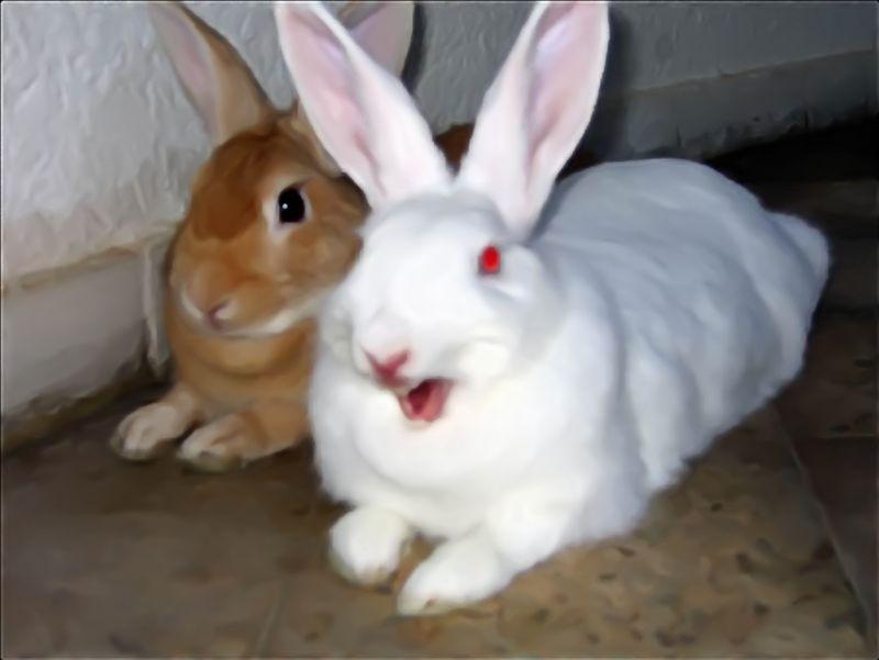 figure of fun yawning rabbits