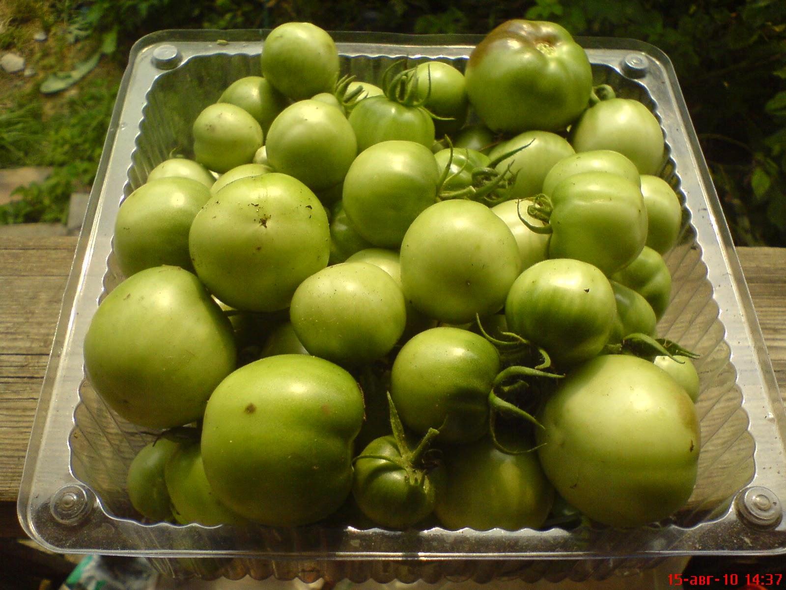 видио инструкция по борьбе с фитофторозом на томатах