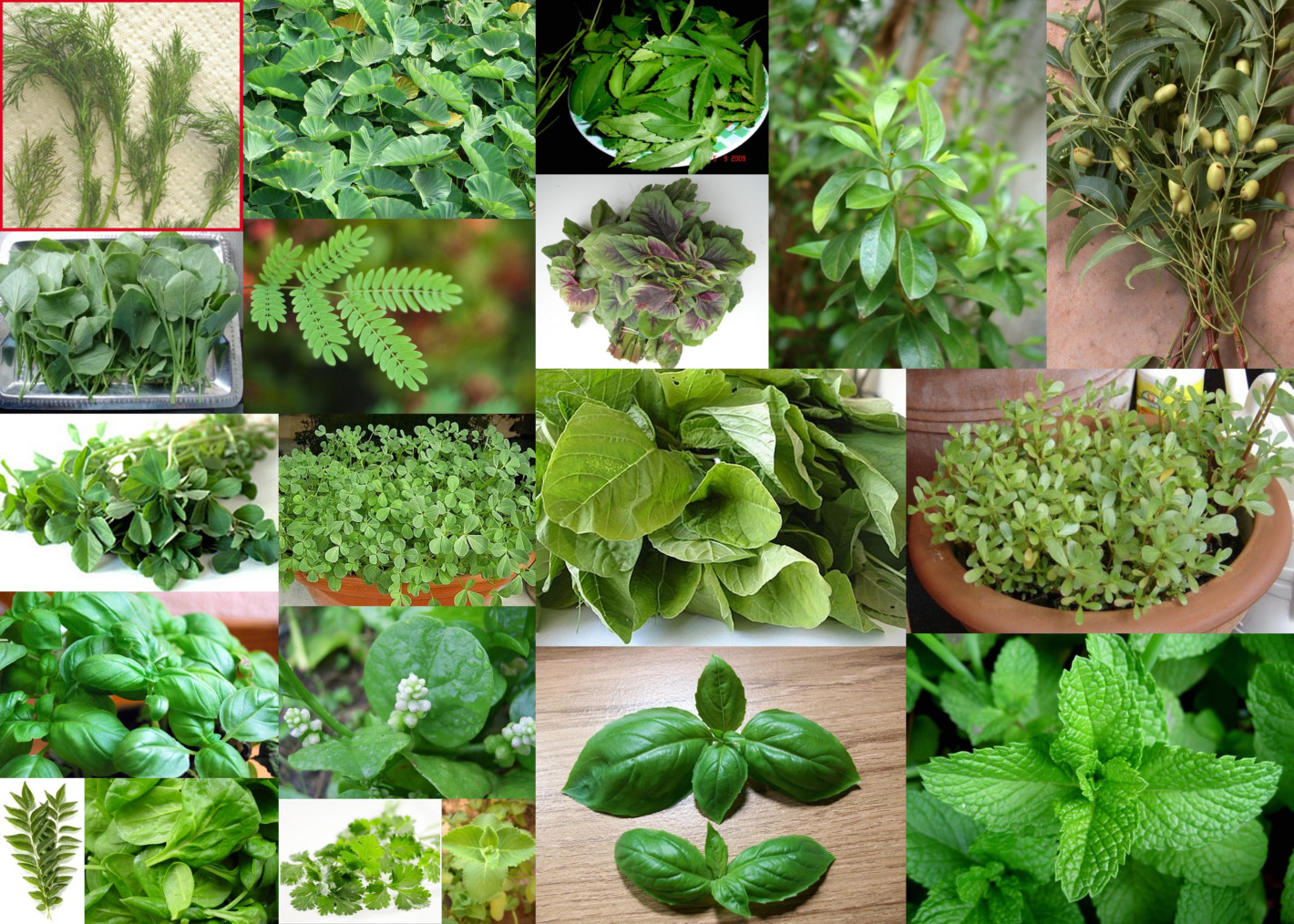 Paddu s tip house herbs and leafy vegetables