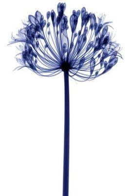 Bunga-Bunga Yang Terkena Sinar X
