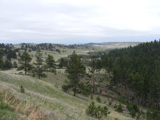 Winding Road, Custer State Park