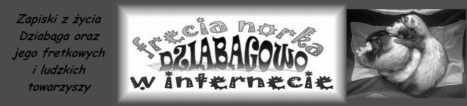DZIABAGOWO - frecia norka w internecie
