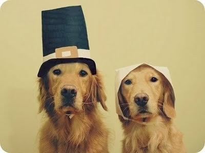 dogs in costumes thanksgiving golden retrievers